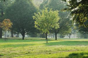 autumn_hyde_park