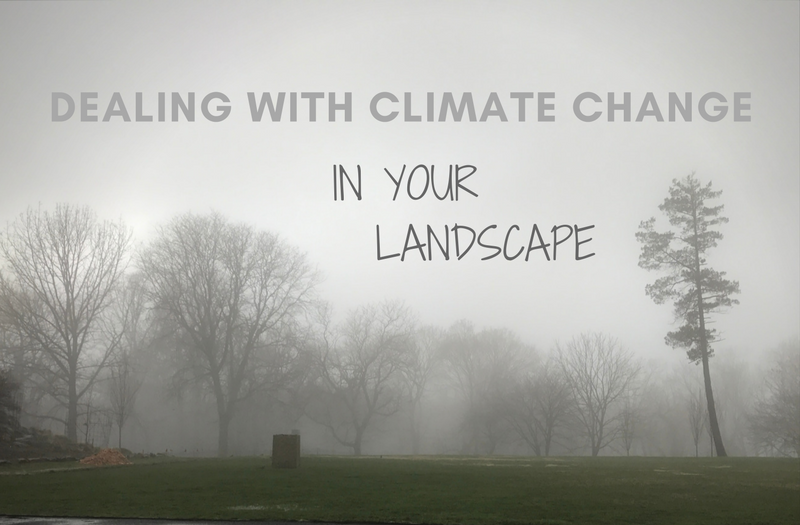 Dealing With Climate Change in Your Landscape